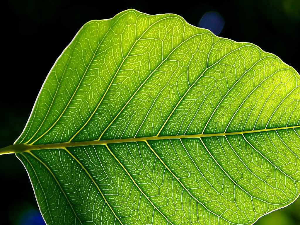 El nitrogen: element imprescindible per als éssers vius